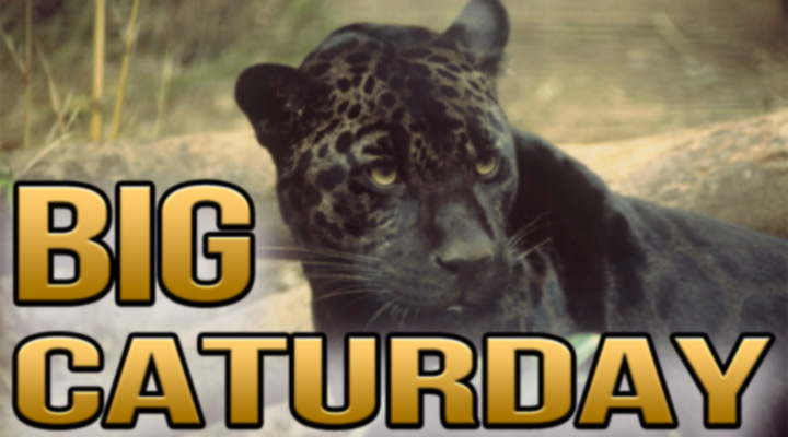 Have A Caturday Weekend!